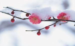 Погода в Луганске на завтра, 11апреля: мокрый снег