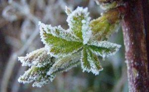 Погода в Луганске на завтра, 25апреля: заморозки