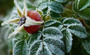 В Луганскую область идут заморозки