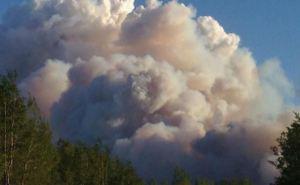 В результате обстрелов уничтожена часть лесных массивов Станицы Луганской