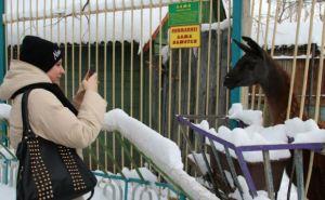 Луганские студенты привезли животным городского зоопарка 100кг мяса (фото)