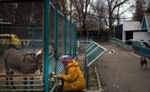 Луганский мясокомбинат возобновил поставки продуктов питомцам зоопарка