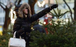 Где в Луганске можно купить новогоднюю елку? (адреса)