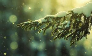 Снег, метели и резкое похолодание. Какая погода ждет украинцев на Новый год?