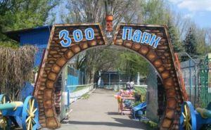 Пережить зиму: хищникам в луганском зоопарке не хватает мяса