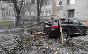 В Харькове сильный ветер повалил деревья и повредил машины горожан