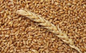 Лутугинский элеватор готов принимать зерно нового урожая