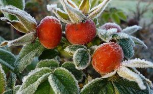 В Луганске ожидаются заморозки до -6°С