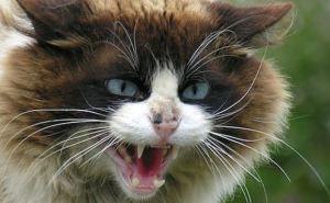 В Харькове объявлен карантин в связи с бешенством животных