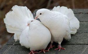 В Луганске прошла выставка-ярмарка певчих и декоративных птиц