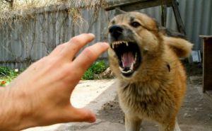 В Харьковской области из-за бешенства животного ввели карантин