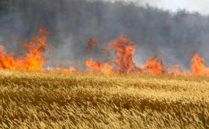 В Станично-Луганском районе ликвидировали масштабное возгорание сухой травы