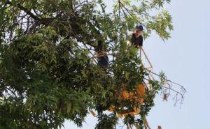 Ликвидация последствий урагана в Луганске (видео)