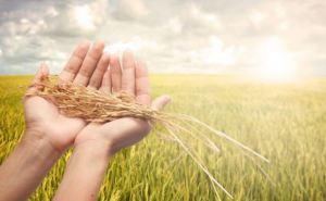 Аграрии Луганской области намолотили почти 1 млн тонн зерна