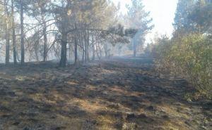 В Донецкой области произошел масштабный пожар в экосистеме (фото)