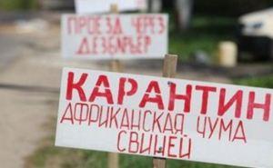 В Харькове объявлен карантин из-за африканской чумы свиней