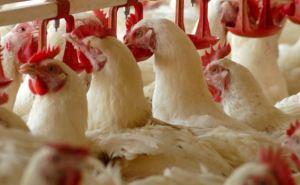 В Луганской области за год сократилось поголовье скота и птицы