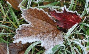В Луганской области ожидаются заморозки