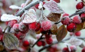 Погода в Украине портится, ожидаются заморозки. —Прогноз
