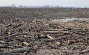 В Луганской области продолжаются работы по разминированию