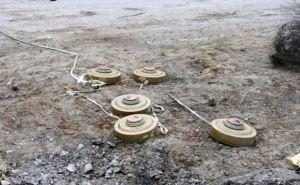 ОБСЕ требует убрать минные поля на линии разграничения на Донбассе