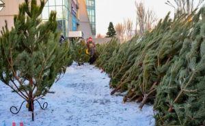 В Донецке открыли около 100 елочных базаров