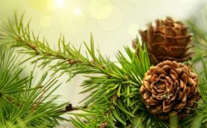 Правила безопасной установки новогодней елки (инфографика)