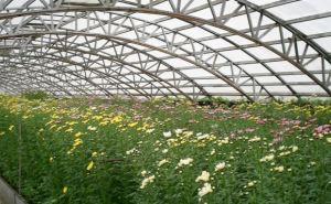 В Луганске коммунальщики приступили к посеву цветов и овощных культур