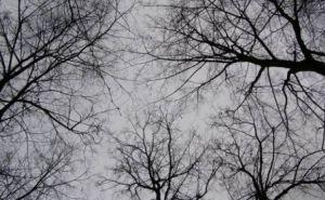 Прогноз погоды в Луганске на последний день зимы