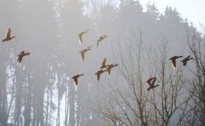 Прогноз погоды в Луганске на 3Вмарта