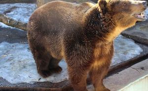 В Харьковском зоопарке проснулись медведи (видео)