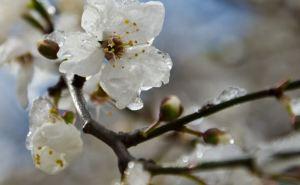 В Донецкой области ожидаются заморозки и мокрый снег