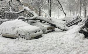 В Харькове из-за снега деревьями привалило 12 машин (фото)