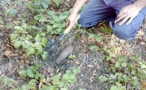 В Луганской области за неделю обнаружили 83 взрывоопасных предмета