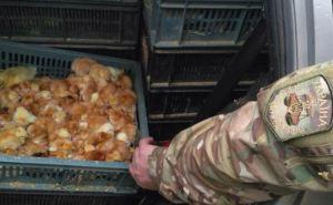 В Луганской области задержали 2 тыс. утят и цыплят, которых везли в ЛНР (фото)