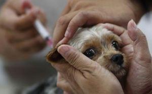 В самопровозглашенной ЛНР вакцинировали от бешенства 4 тыс. домашних животных
