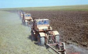 Аграрии ДНР посеяли более трети всех технических культур