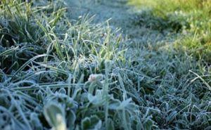 В Харькове сегодня ночью возможны заморозки