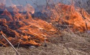 На территории самопровозглашенной ЛНР объявлен 5 класс пожарной опасности