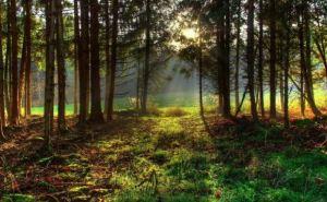 Жителям Луганской области запретили посещать хвойные леса