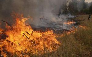 В Донецкой области объявлен наивысший уровень пожароопасности