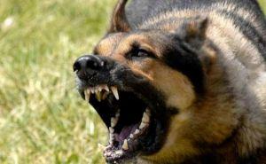 В Краснодонском районе зафиксирован случай бешенства