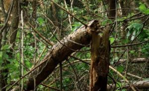 В Луганске сильным ветром повалило 26 деревьев