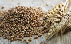 В самопровозглашенной ЛНР планируют собрать 300 тыс. тонн зерна