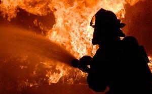 Более 100 домов, 500 га леса и степи уничтожено пожаром в самопровозглашенной ЛНР за сутки