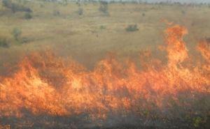 Пожарные МЧС ЛНР пять часов тушили степной пожар (Фото)