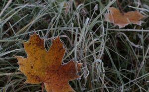 Луганчан предупреждают о заморозках