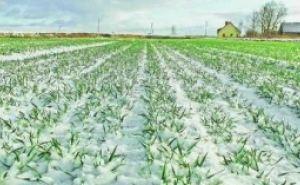 Аграрии ЛНР компенсируют недосев озимых увеличением площадей под яровые культуры