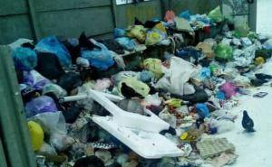 Северодонецк стал рассадником антисанитарии: неделю не вывозят мусор и бытовые отходы
