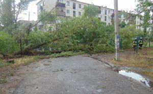 Вчерашняя непогода оставила без света около 20 тысяч семей. Сейчас без света почти 9 тысяч абонентов